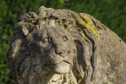 A Life Size Pair Of Fine English Country House Stone Lion Statues (over 3 ft high)